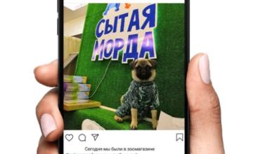 """Скидка за отметку """"Сытой Морды"""" в Instagram!"""